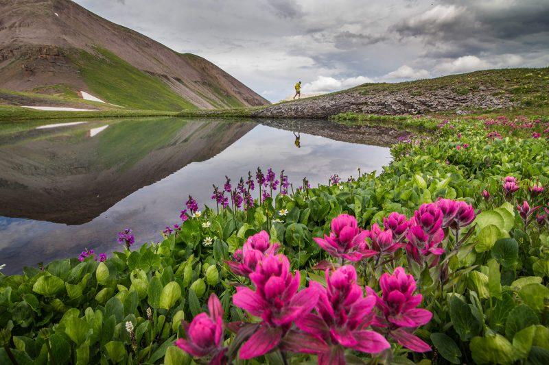 telluride-hike-flowers